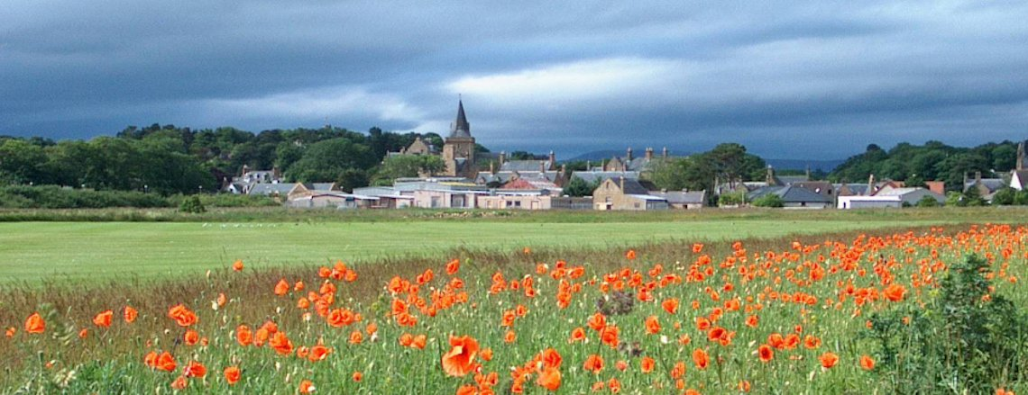 Dornoch Poppies
